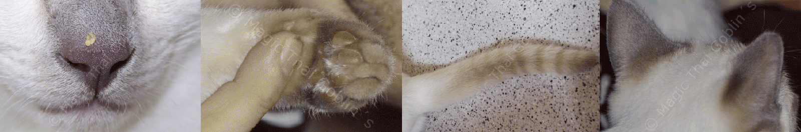 Particolari significativi: naso, polpastrelli, coda, orecchie.